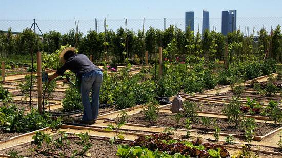 La revolución de los tomates